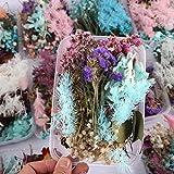 Sunlera 1 Caja Seca Material del Marco Foto de la Flor Ornamento de la Boda Decoración DIY Hecho a Mano artesanía Flor Seca Haciendo Color al Azar